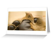 Lion's paw Greeting Card