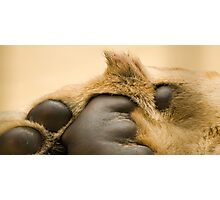 Lion's paw Photographic Print
