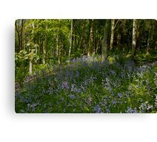 Patch of Bluebells Canvas Print