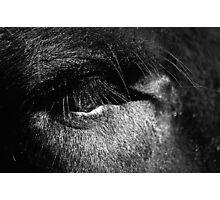 Eye of a Gaur Photographic Print