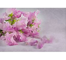 ~ sweet peas ~ Photographic Print