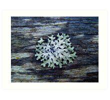 No! It's Not a Snow Flake. Art Print