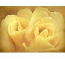 Twin rose Photographic Print