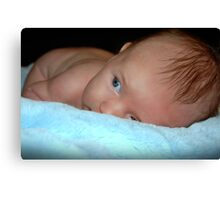 Baby blues... Canvas Print