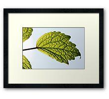 Leaf and Blue Sky Framed Print