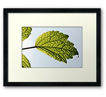 Leaf and Blue Sky Framed Print