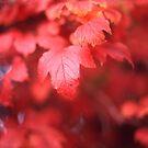 Autumn Leaves by Derwent-01