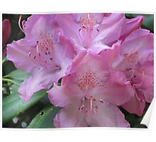 The Power of Pink Posies Poster