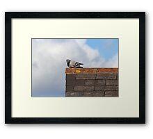 Good Morning Pigeon Framed Print