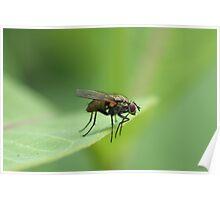 Fly on Leaf  Poster