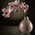 pink orchids by purpleminx