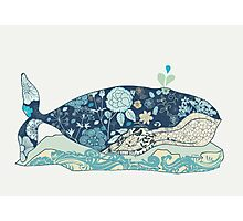 a blue whale Photographic Print