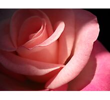Pink Rose. Photographic Print