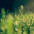 Wet Grass by Jenn Kellar