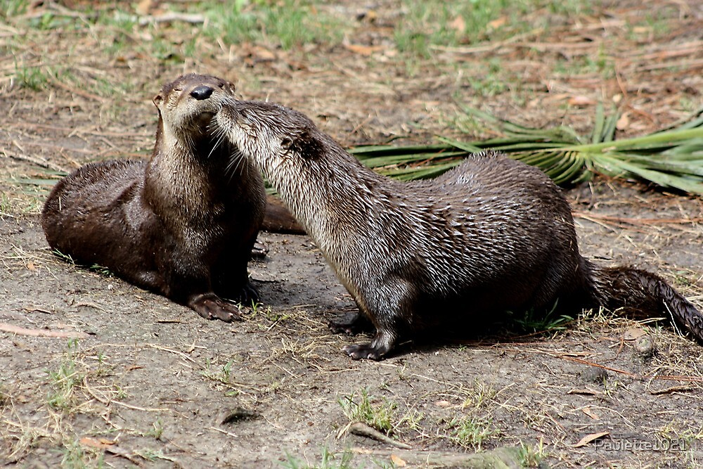 River Otter Smooches by Paulette1021