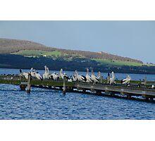 Six Bird Species Photographic Print