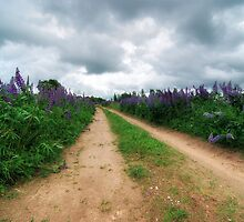 Lupin Path by Martins Blumbergs
