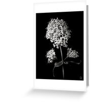 Centranthus Ruber Albus in Black and White Greeting Card