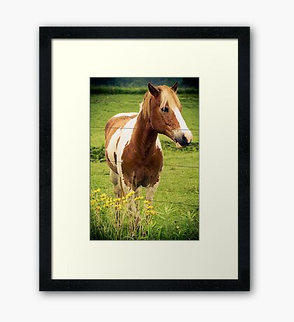 SWEETIE PIE Framed Print