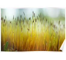 Moss Sprigs Poster
