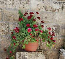 Church of St. Lazarus Courtyard Flowers... by Carol Clifford