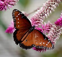 Beautiful Butterfly on a Pink Flower by Paulette1021