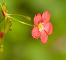 Dancing Flower by Marilyn Cornwell