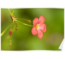Dancing Flower Poster