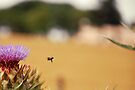 Bee, Thistle and Field of Wheat by Denis Marsili - DDTK