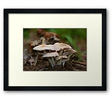 """What do you call a mushroom who likes to party?....a """"Fungi"""" Framed Print"""