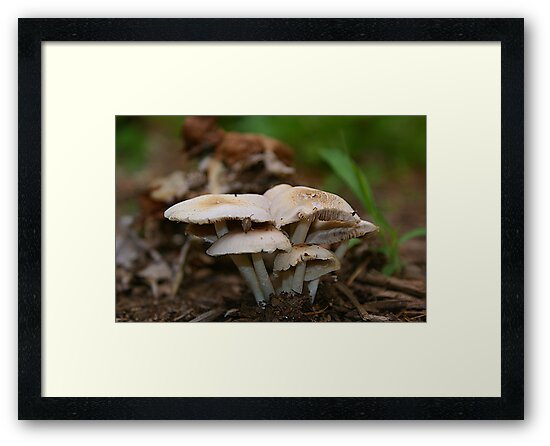 """What do you call a mushroom who likes to party?....a """"Fungi"""" by DDLeach"""