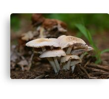 "What do you call a mushroom who likes to party?....a ""Fungi"" Canvas Print"