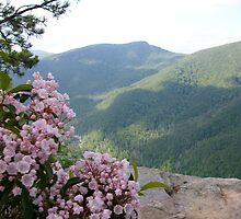 Linville Gorge by tneldreth