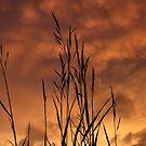 After The Storm by Jenn Kellar