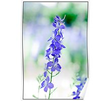 Blue May Flower 01 Poster