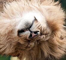 Sleepy Head by Val Saxby