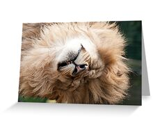 Sleepy Head Greeting Card