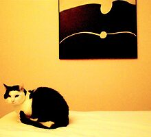 Conversation between a cat and a picture .. by Janet GATHIER-COOMBER
