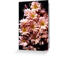 pink daisies,flower stand,berkeley Greeting Card