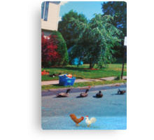 I don't care if that quack did say you were chicken!  If you go over there, you'll just be a sitting duck!! Canvas Print