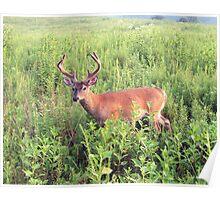Deer at Cades Cove 002 Poster