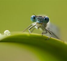 Big blue eyes by Angi Wallace