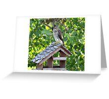 Juvenile Cooper's Hawk Greeting Card