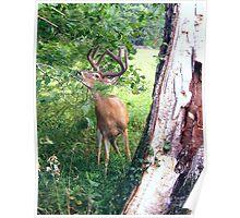 Deer at Cades Cove 005 Poster
