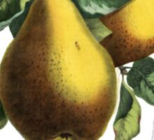 Poire - French for Pear Sticker