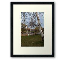 Birch tree 1 Framed Print