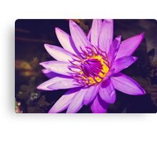 Louts Flower Close up Canvas Print