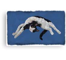 Zorro is watching - Blue Canvas Print