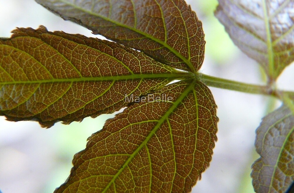 Leaf X-ray,...See My Veins by MaeBelle
