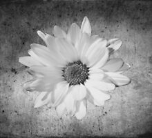 Texturized in white by Ghelly